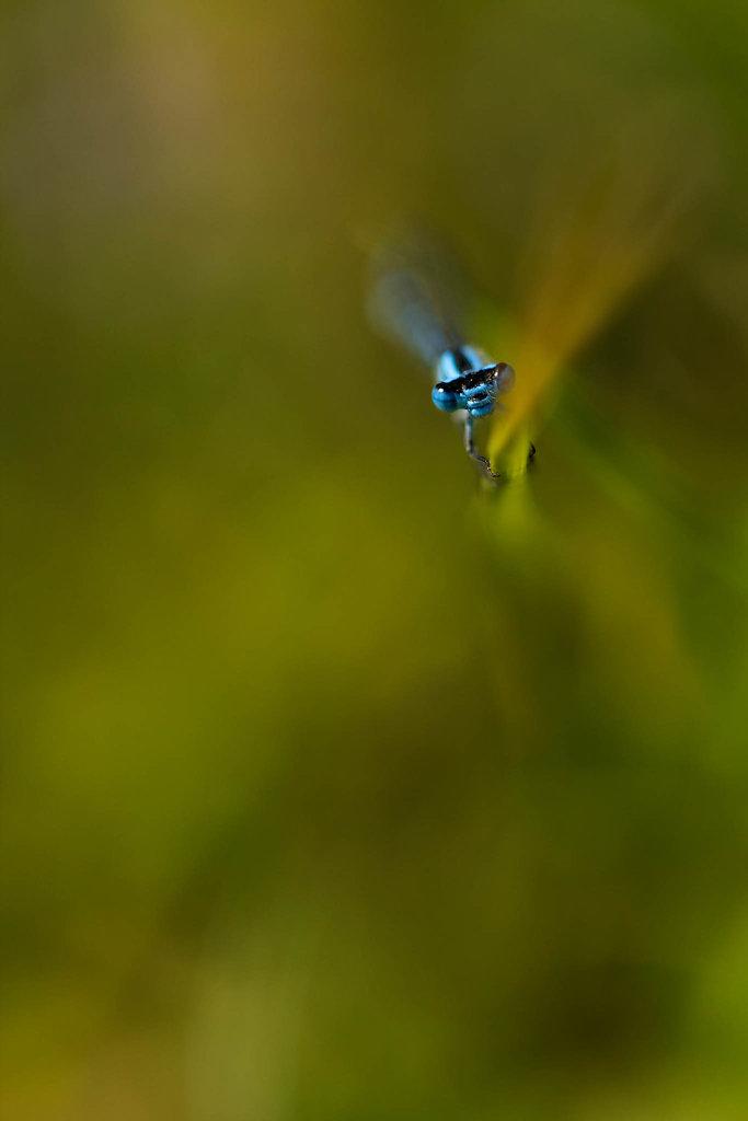 Étreinte bleue