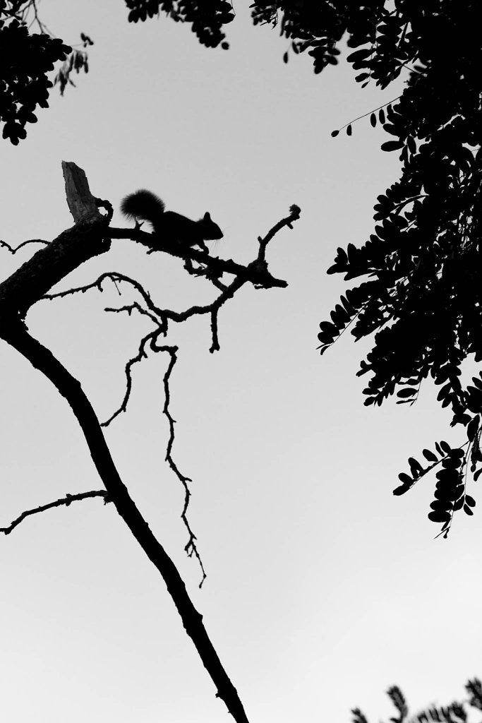 L'ombre du lutin